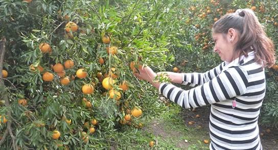 despoje citrus